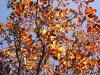 arbol_hojas
