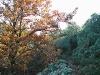 arboles_2